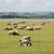 овец · дороги · весны · трава - Сток-фото © w20er