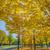 yeşil · ağaç · küçük · yeşil · yaprakları · gökyüzü - stok fotoğraf © w20er