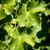 green vine leaves stock photo © w20er