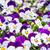 bloemen · tuin · voorjaar · natuur · blad · groene - stockfoto © w20er
