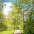 groene · boom · ontspannen · natuur · kleuren - stockfoto © w20er
