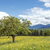 virágzó · mező · hegyek · tavasz · tájkép · napos · idő - stock fotó © w20er