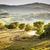 manzara · Toskana · tipik · bahar · doğa · güzellik - stok fotoğraf © w20er