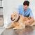 veterinarian examining a cute dog stock photo © wavebreak_media
