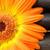 czarny · kamienie · pomarańczowy · słonecznika - zdjęcia stock © wavebreak_media