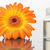 cam · küçük · şişe · turuncu · beyaz - stok fotoğraf © wavebreak_media