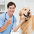 veterinario · examinar · boca · cute · perro · médicos - foto stock © wavebreak_media