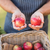 farmer hands showing two red apples stock photo © wavebreak_media