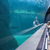 мало · глядя · рыбы · цистерна · аквариум - Сток-фото © wavebreak_media