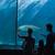 boldog · család · néz · hal · tank · akvárium · szeretet - stock fotó © wavebreak_media