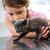 девочку · играет · ветеринарный · котенка · животного · ухода - Сток-фото © wavebreak_media
