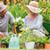 abuelo · nieto · jardinería · junto · nino · jardín - foto stock © wavebreak_media