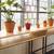 close up view of flowerpots in a line stock photo © wavebreak_media