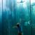 мальчика · рыбы · аквариум · природы · весело · животного - Сток-фото © wavebreak_media