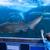 fiatalember · megérint · tank · hal · cápa · akvárium - stock fotó © wavebreak_media