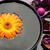 Orange gerbera floating in a black bowl and purple dry flowers stock photo © wavebreak_media