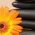pomarańczowy · słonecznika · czarny · kamienie - zdjęcia stock © wavebreak_media