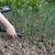 promieniowanie · żywności · strony · ogród · roślin - zdjęcia stock © wellphoto