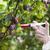 comida · biotecnologia · genética · manipulação · biologia · ciência - foto stock © wellphoto
