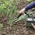 radiação · comida · mão · jardim · planta - foto stock © wellphoto