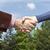öreg · kezek · felismerhetetlen · idős · nő · nők - stock fotó © wellphoto