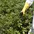 groenten · tuin · gezondheid · boerderij · werken · landbouw - stockfoto © wellphoto