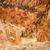 canón · rocas · árboles · anfiteatro · oeste · EUA - foto stock © weltreisendertj