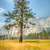 yosemite lonley tree stock photo © weltreisendertj
