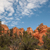 trees in bryce canyon stock photo © weltreisendertj