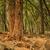 yosemite look into fire forest stock photo © weltreisendertj