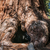секвойя · ствол · корень · парка · Калифорния · лес - Сток-фото © weltreisendertj