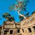gigante · árvore · prom · Angkor · Wat · templo · Camboja - foto stock © weltreisendertj