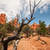 dry branch bryce canyon stock photo © weltreisendertj