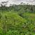 erba · 2011 · acqua · campo · verde · silhouette - foto d'archivio © weltreisendertj