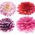 roze · dahlia · Geel · bloem · zachte - stockfoto © wikki