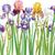 Iris · fiori · primavera · fresche · fiore · colorato - foto d'archivio © wikki
