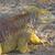 イグアナ · 肖像 · マクロ · ショット · 頭 · 森林 - ストックフォト © wildnerdpix