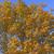 carvalho · cair · árvore · folha · árvores · verão - foto stock © wildnerdpix