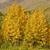 naturaleza · brillante · colorido · caída · hojas - foto stock © wildnerdpix