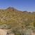 пустыне · весны · кактус · Полевые · цветы · Аризона - Сток-фото © wildnerdpix