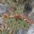 cacto · planta · flor · natureza · verde · bola - foto stock © wildnerdpix