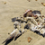 死んだ · 鳥 · 小さな · 舗装 · 自然 · 通り - ストックフォト © wildnerdpix