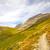 iz · alpine · vadi · düşmek · yukarı · bahçe - stok fotoğraf © wildnerdpix