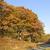 Herbstfarben · Natur · hellen · farbenreich · fallen · Blätter - stock foto © wildnerdpix