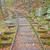 バージニア州 · ヴィンテージ · 彫刻 · 刻ま · 百科事典 · 花 - ストックフォト © wildnerdpix
