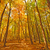trail into fall forest colors stock photo © wildnerdpix
