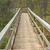 boardwalk into the forest stock photo © wildnerdpix