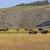 バイソン · 1 · 空 · 青 · 草 · 風景 - ストックフォト © wildnerdpix