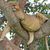 young african male lion asleep in a tree stock photo © wildnerdpix