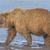 mond · portret · tanden · hoofd · dierentuin - stockfoto © wildnerdpix